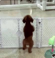excited animal gif.  Gif To Excited Animal Gif O