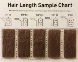 Hair Length Sample Chart Shave Blade Sample Chart For Grooming Grooming 101 Dog