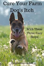 Three easy steps to treating your farm dog's itchy skin without ...