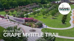 Around Town: Crape Myrtle Trail of McKinney, Texas - YouTube