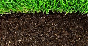 Image result for Organic Fertilizer