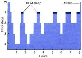 Rem Sleep Chart Lets Talk About Dreams Part Three Sanctuary Counseling