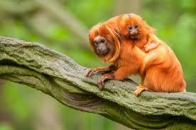 Resultado de imagem para bebés da fauna