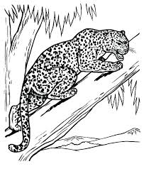 Coloring Pages Leopard Coloring Pages Online Babies Snow Page Free
