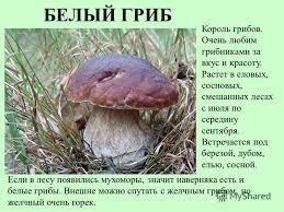 Реферат Грибы реферат на тему грибок Реферат Грибы и их использование ack spb ru
