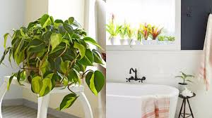 Plants That Will Grow Better In Your Bathroom Youtube