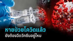 หายป่วย โควิด-19 แล้ว ยังต้องฉีดวัคซีนอยู่ไหม? และควรรับเมื่อไร : PPTVHD36