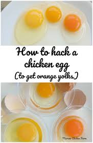 Egg Yolk Colour Chart How To Hack A Chicken Egg To Get Orange Yolks Murano