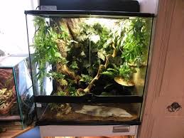 crested gecko habitat google search