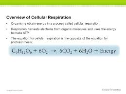 cellular respiration essay test questions