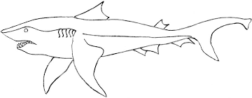 Small Picture Killer shark printable coloring page for kids