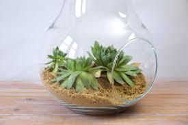 Vintage glass pear terrarium or potpourri