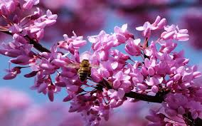 spring nature backgrounds. Res: 2560x1600 Spring Nature Backgrounds
