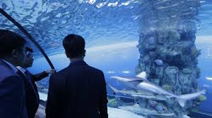 Meet the real thing at Shark Week The National