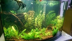 Image result for aquarium needs to be worked on by people that have good reputations