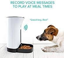 Amazon Com Arf Pets Automatic Pet Feeder Food Dispenser For
