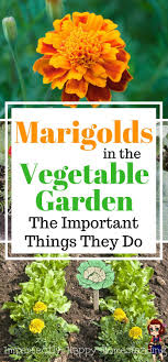 Small Picture The 25 best Vegetable gardening ideas on Pinterest Gardening