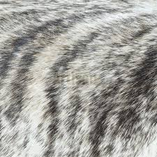 light brindle cowhide rug large size feet gray from natural