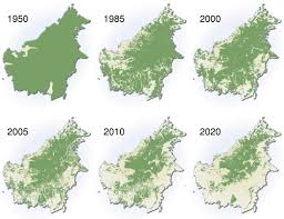amazon rainforest deforestation. Delighful Rainforest Deforestation Images Of The Amazon Past And Into Future And Rainforest