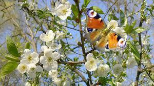 Контрольная работа № по природоведению И Грущинская Природа  Контрольная работа №3 по природоведению И Грущинская Природа весной