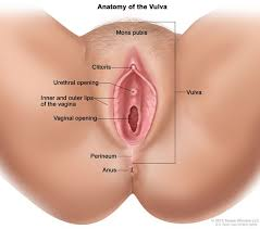 How to penetrate a vagina