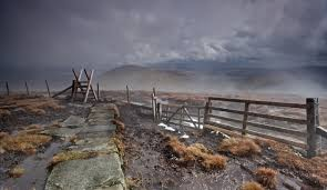 Image result for cheviots