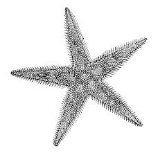 more resources about echinoderm the shape of life the story of sea star diversity drawing