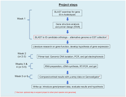 Flow Chart Title Flow Chart For Molecular Lab Project