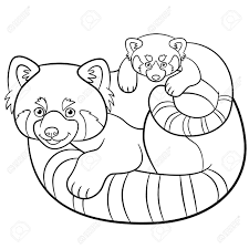 Panda Roux Dessin