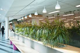 office plant displays. Open Plan Offices - Indoor Plants Displays From Ambius Office Plant T