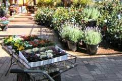 wodonga plant farm and garden gallery cafe