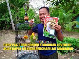 Ada kabar gembira dari sri mulyani. Cara Pak Guru Honorer Mainkan Lovebird Agar Menghasilkan Tambahan Media Ronggolawe