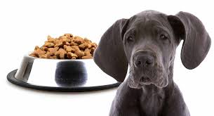 Great Dane Food Chart Feeding A Great Dane Puppy Schedules For Giant Breeds