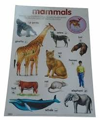 Details About Early Learning Children S Mammals Laminated Poster Chart