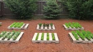box garden. Mavis Butterfield   Backyard Garden Plot Pictures \u2013 Week 23 Of 52 - One Hundred Dollars A Month Box