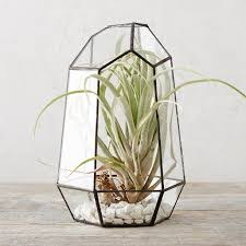 A spacious home for indoor greenery, this many-faceted terrarium is our  pick for