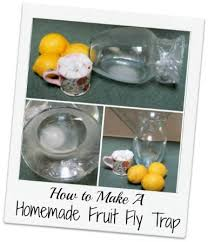 25 unique Homemade fruit fly trap ideas on Pinterest