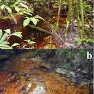 imagem de Japurá Amazonas n-19