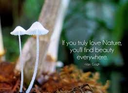 Quotes On Nature And Beauty Best Of If You Truly Love Nature You Will Find Beauty Everywhere Picture