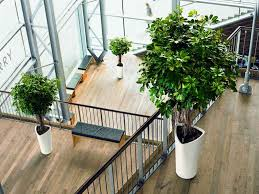 office indoor plants. Office Plant And Maintenance Indication Architect Intended For House With Indoor Plants To Make Your Fresher L