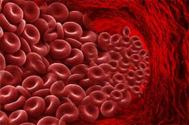 Image result for blood cells
