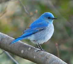 Image result for Idaho winter birds