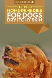 Home Remedies for Dogs Dry Itchy Skin | Aminals | Pinterest ...