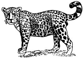 Small Picture Jaguar Coloring Pages Bulk Color