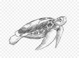 Tartaruga Di Mare Del Disegno Di Animale Illustrazione Vettore Di