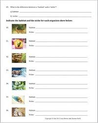 habitat and niche activity sheet answers habitat and niche ecology worksheets and homework