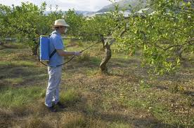 Potted Fig Tree Care During The Winter Months U2014 Veggie Gardening TipsDormant Fruit Trees