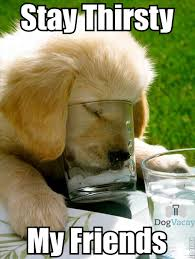 Stay Thirsty Meme copy - DogVacay Official Blog via Relatably.com