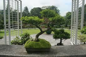 bonsai gardens. bonsai garden austin tx gardens r