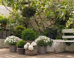 BBC  Gardening  Gardening Guides  Techniques  Plant Up A ContainerContainer Garden Ideas Uk